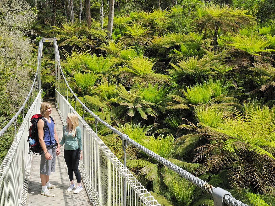 Tarra Bulga National Park Visit Latrobe City